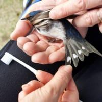 傷ついた燕を確保しています。どうすれば良いのか