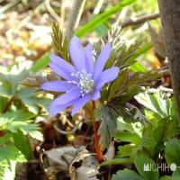 令和2年3月26日(木) 角田山で花見♪