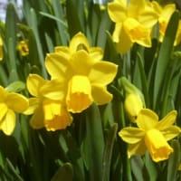 それでも春の花は咲き…