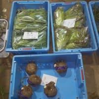 明日三次農協北部支店の駐車場で軽トラ朝市が有るので出品野菜を準備