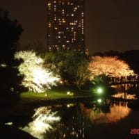 浜離宮へ桜を・・・