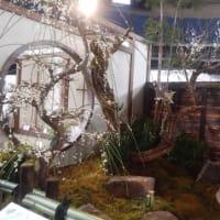 東京ドーム「世界らん展2020」を見て