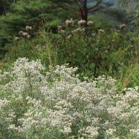 草原の花々