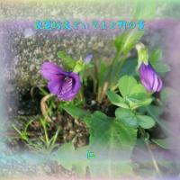 フォト良寛さんとあそぶysw1304『 良寛坊友でいてよと野の菫 』