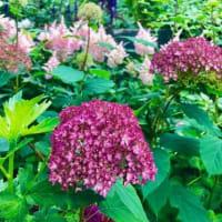 花と絶景に癒される
