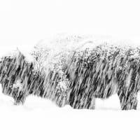 天敵に襲われ驚愕、思わず片足立ちのマーモット 野生動物写真の大賞受賞   CNN