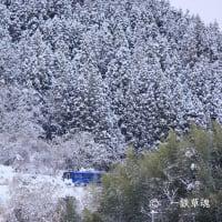 クリスマスツリーから顔を出したSR1系