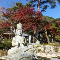 初沢町の高乗寺まで散策 2020.11.23