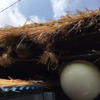 済州島の冬虫夏草