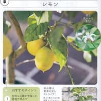 レモン(檸檬) 2021年10月20日(水)