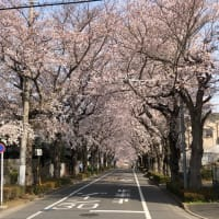 東浦和周辺の桜開花情報vol.1 &特小レピーター情報!