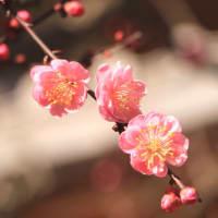 早春・京の街歩きⅤ