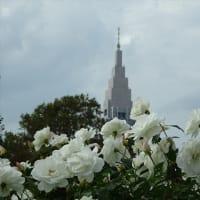 「秋バラ」/新宿御苑