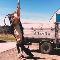 新動物愛護法、獣医師は動物虐待通知義務、農家にも愛護の義務を課しています