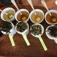 白茶@梅ヶ島の可能性について