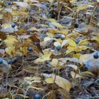 晩秋の薬草の森