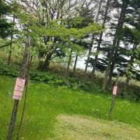樹木の成長
