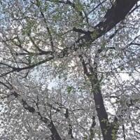 春のエネルギー