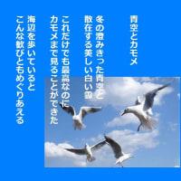 青空とカモメ