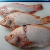 第1弾:魚を食べよう6つのステップ「ティラピア」など:  この魚、マレーシアではあまりに有名
