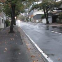 1日雨だったよ。冷えるようになったねえ。191018