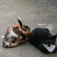 身内猫にも色々あるよ2