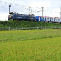 EF66 27 8862レほか甲種輸送 (2019年9月22日 地元の田んぼ)