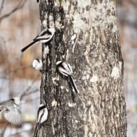 驚き!…樹液に群がる森の妖精