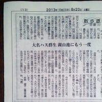 日本海新聞に永明寺の大名蓮の記事掲載