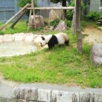王子動物園、大人のための動物園講座