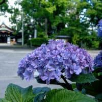 やっと穏やかな大阪に戻りました
