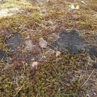 庭仕事1 モグラの穴を埋めも大変だ!