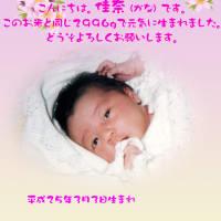 出産内祝い米 桃の節句バージョン