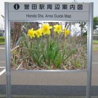 駅周辺案内図~その15(黄色い花のスイセン)