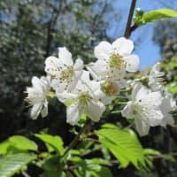 白い花の存在を忘れてはいけない