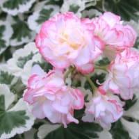 アップルブロッサムホワイトウェディングの花は
