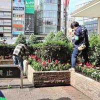 ●10/20 環境の緑化と美化報告 花もまちもきれい!