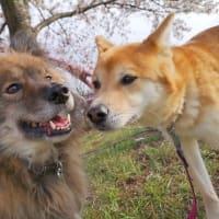 明日26日13-17時、井の頭公園ステージ犬猫譲渡会