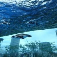 「天空のペンギン」/サンシャイン水族館