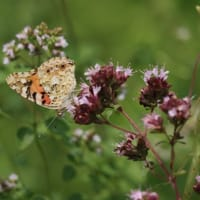 7月の美しい花と可愛い昆虫たち 2021