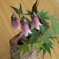立夏の植物へ