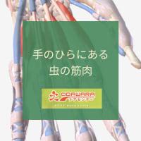 手のひらにある虫の筋肉