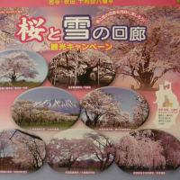 東北・・桜をもとめて