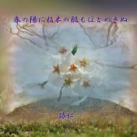 フォト575あそび『 春の陽に枯れ木の肌もほとめきぬ 』yvv0703