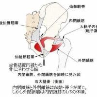 肛門奥の痛みに内閉鎖筋刺針が有効だった症例の考察 ver.1.4
