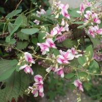 国民全体の奉仕者たれ 菅内閣が始動 /萩の花が咲いた。仙台野萩と江戸絞り