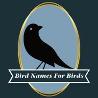 鳥の名前と差別