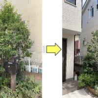 玄関横の植木が大きくなりお隣の敷地に枝がはみ出してしまったのでサッパリと剪定作業