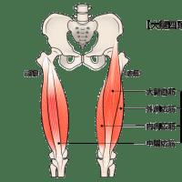 膝周りの筋肉その1