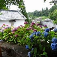 柳谷観音の紫陽花 その1